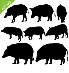 Boar silhouettes vector image