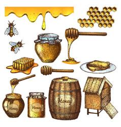 Honey set sketch vector