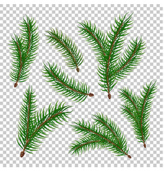 realistic spruce fir tree branches set vector image