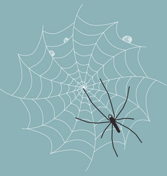 spider on wet web vector image