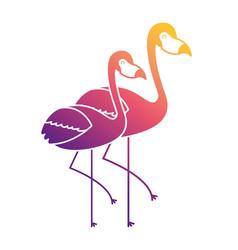 two pink flamingo bird exotic image vector image vector image