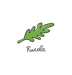 arugula salad or rucola leaves hand drawn cartoon vector image