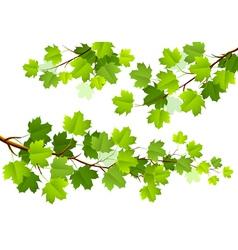 Green maple leaves vector