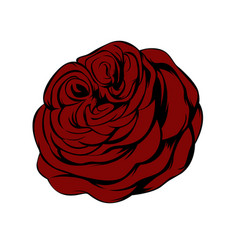 red rose flower isolated on white background vector image