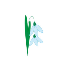 Snowdrop flower isolated vector