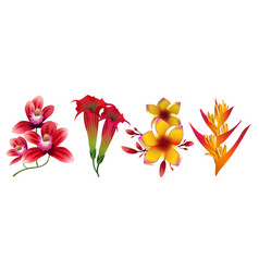tropical exotic flowers isolated on white vector image