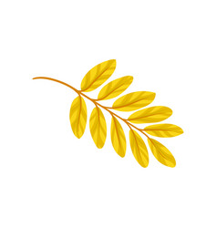 Yellow autumn aronia leaf on a vector