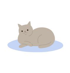 cute cartoon gray cat lying on carpet flat vector image