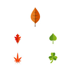 Flat icon leaf set of foliage hickory leaf and vector