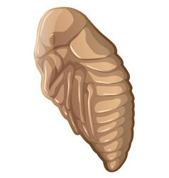 Flea in a cocoon vector