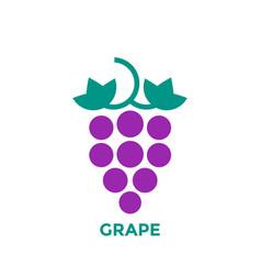 Grape logo on white vector