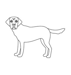 Mastiff single icon in outline stylemastiff vector