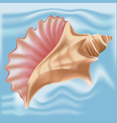 Sea shell in seashell isolated vector