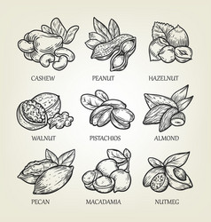 Sketch of different kinds of nuts vector