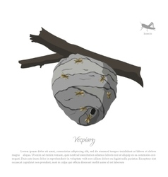 Vespiary drawing wasp hive on a branch vector