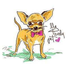 Little cute chihuahua dog vector image vector image