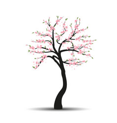 tree sakura vector image vector image