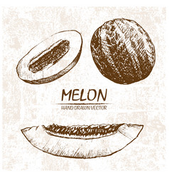 digital detailed melon hand drawn vector image