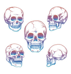 colorful skull sketch icons collection vector image