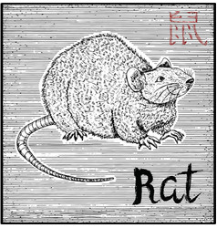 Engraved of zodiac symbol with rat vector