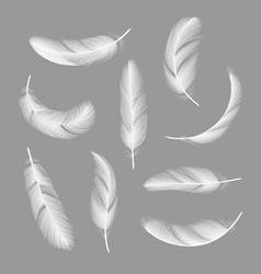 Feathers realistic flying furry weightless white vector