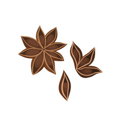 Flat icon of dry star anise with seeds vector
