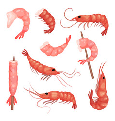flat set of pink shrimps peeled prawns vector image