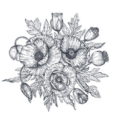 Floral composition of hand drawn poppy vector