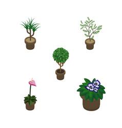 Isometric flower set of flowerpot grower vector
