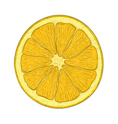 orange slice hand drawn sketch vector image