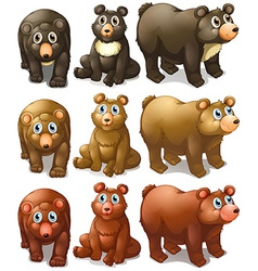 collection bears vector image