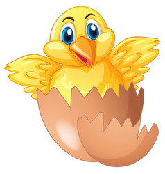 Little chick comes out egg vector