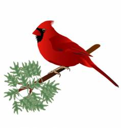 male cardinal vector image