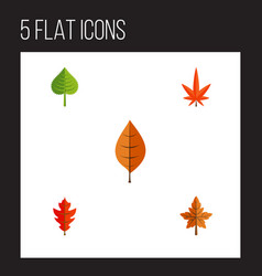 flat icon leaves set of foliage aspen alder and vector image