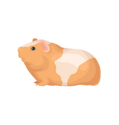 flat icon of guinea pig with orange-white vector image