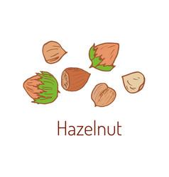 hazelnuts hand drawn vector image