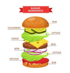 burger ingredients set vector image vector image