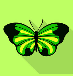big green butterfly icon flat style vector image