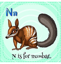 Flashcard letter n is for numbat vector