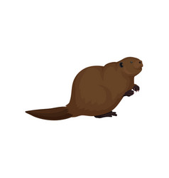Flat icon of brown beaver large forest vector