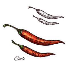 Chili pepper seasoning plant sketch icon vector