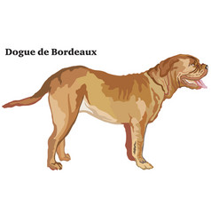 Colored decorative standing portrait of dog dogue vector