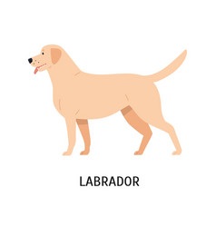 Labrador retriever funny hunting dog or gundog vector