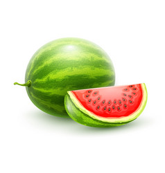 Watermelon whole fresh ripe vector