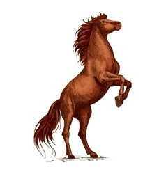 Wild arabian horse stallion raging and rearing vector