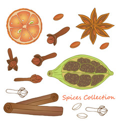 spices collection 1 vector image vector image