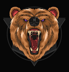 bear grizzly vector image
