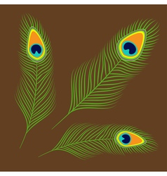 Peacock three feather set collection Exotic vector