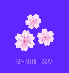 spring time card with sakura flowers vector image