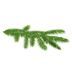 Green branch of fir tree isolated on white vector